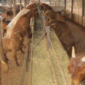 Raised Feeding Troughs