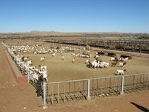 how to build a corral for sheep
